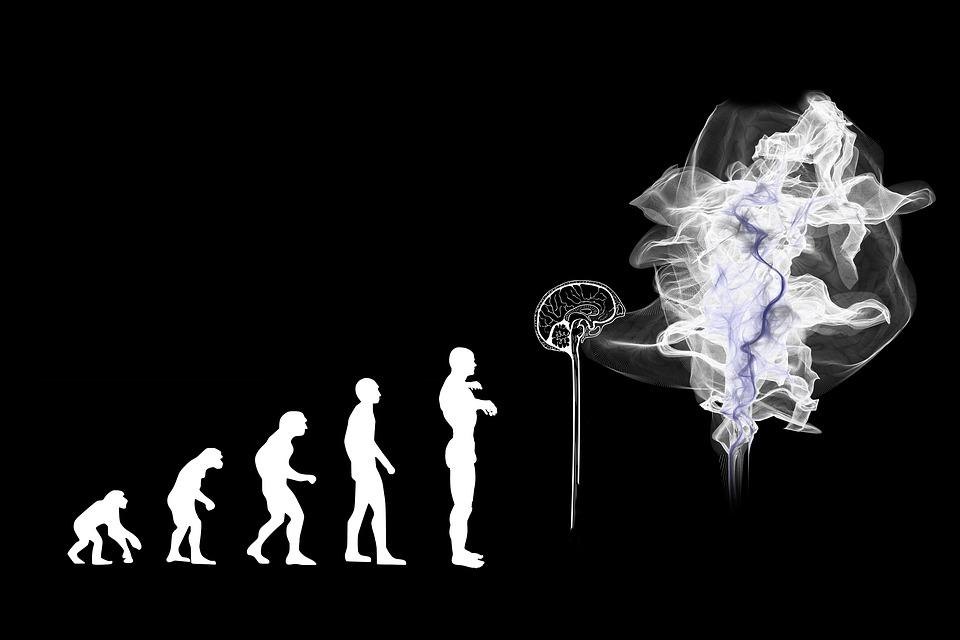 Evolución, Inteligencia Artificial, Cerebro, Espíritu