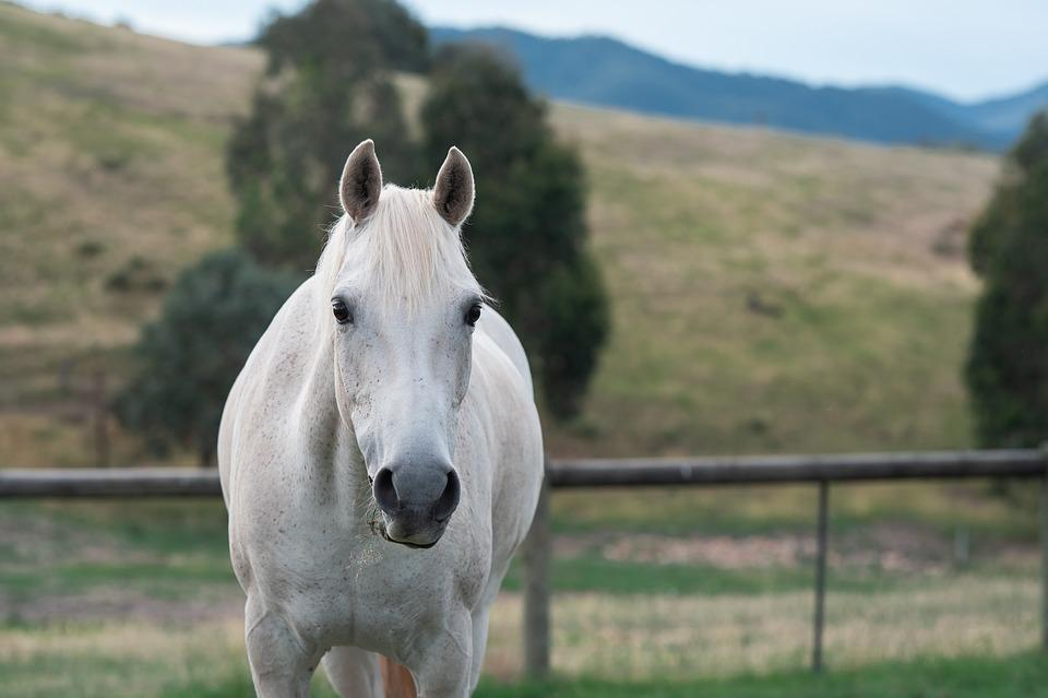 Kuda Poni Australia Pony Foto Gratis Di Pixabay