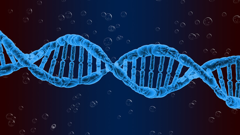 Dna Genetics Biology - Free image on Pixabay