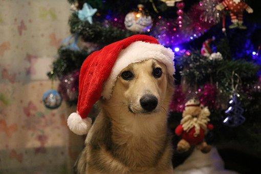 新しい年の前夜, クリスマス, 冬, 休日, トウヒ, ガラ, 犬