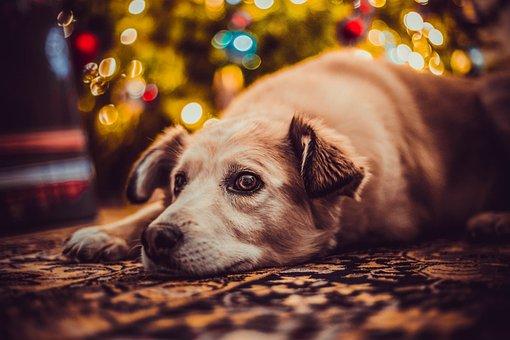犬, 休日, すてきな, 後背位, ライト, ぼけ味, リラクゼーション