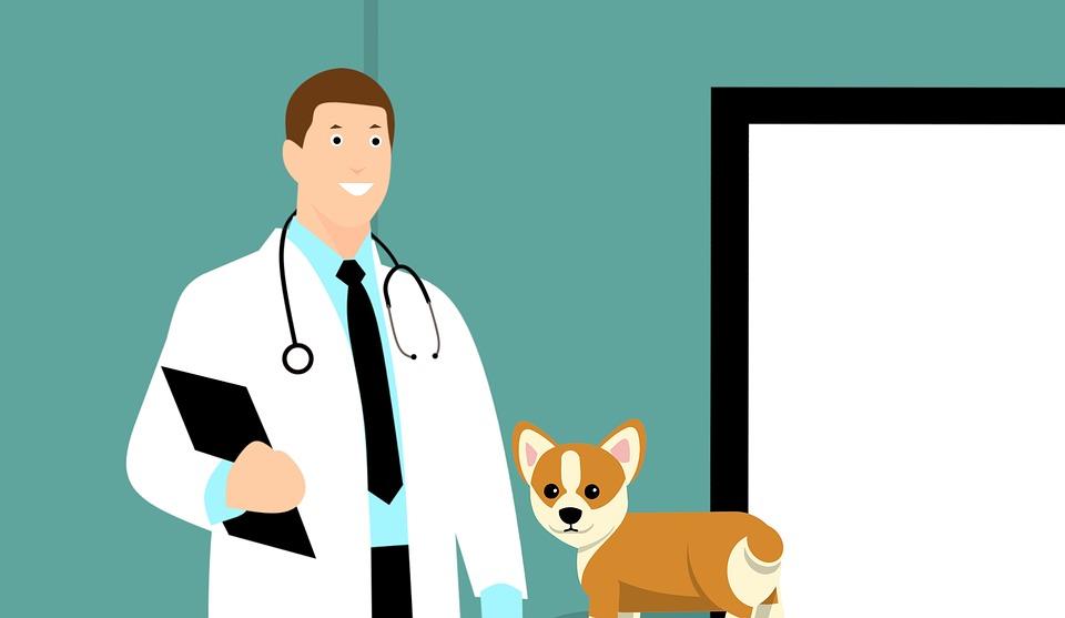 Vet, Médico, Cão, Cachorro, Veterinário