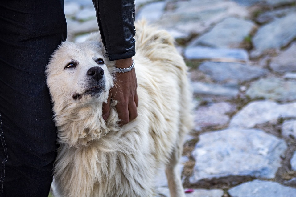 Dog, Animal, Love, Cute, Nature, Romance, Romantic