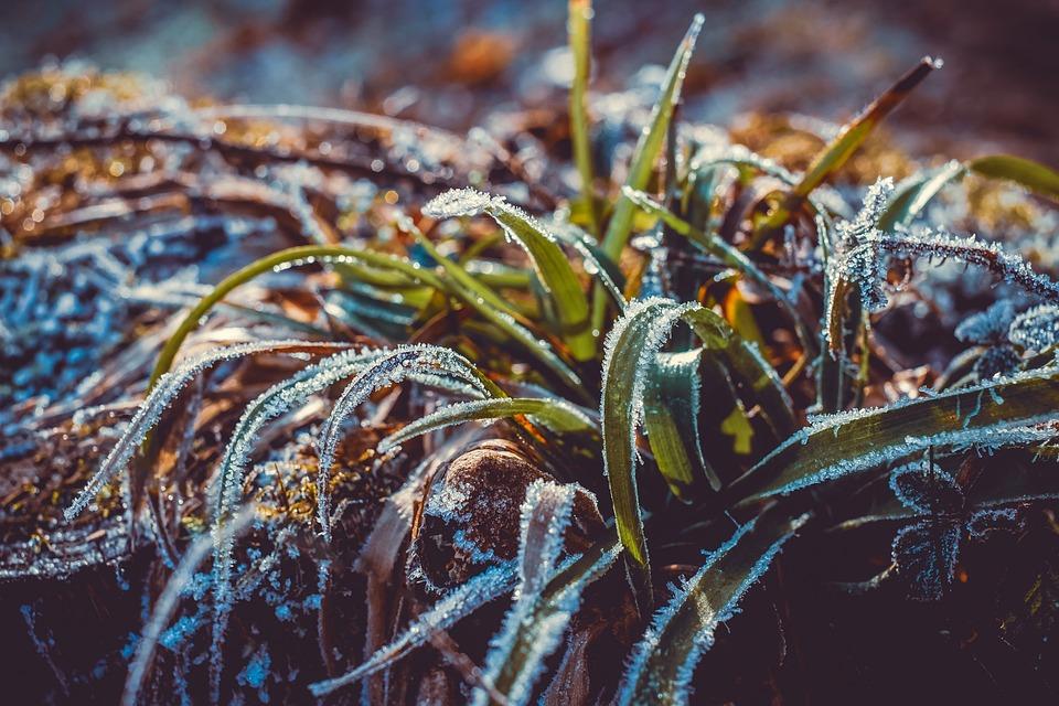 Ijs, Eiskristalle, De Winter, Gras, Frost, Koud, Icy