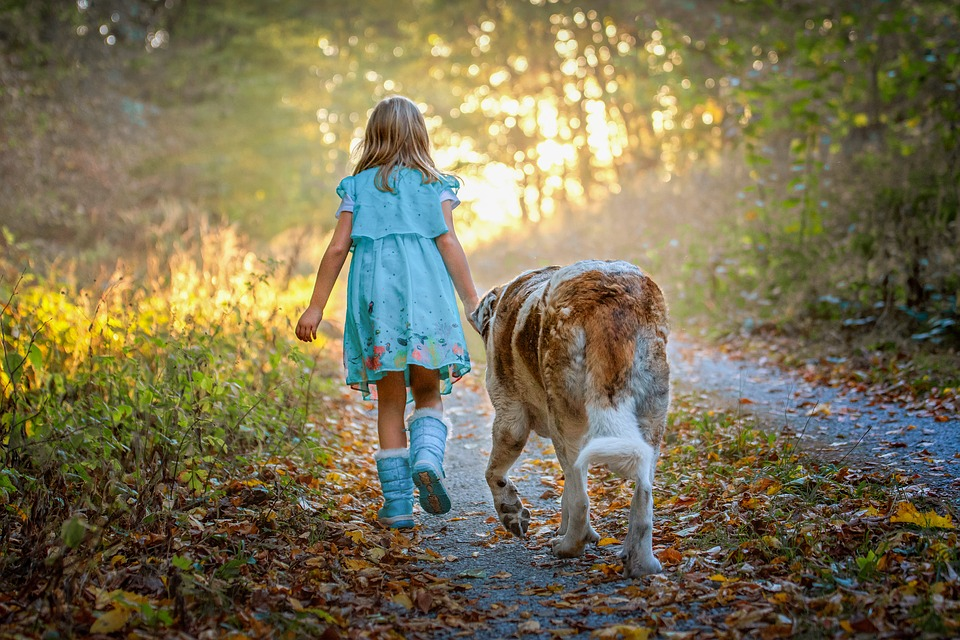 Child, Dog, Forest, Autumn, Childhood, Play, Nature