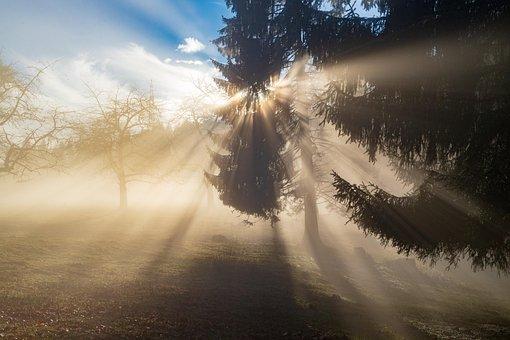 Rays, Sun, Light, Fog, Forest, Sky