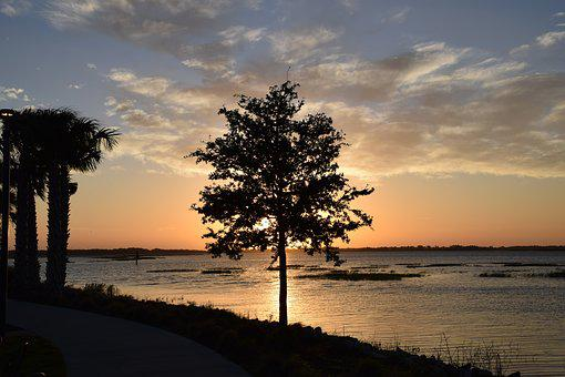 Tree, Lake, Sunrise, Silhouette