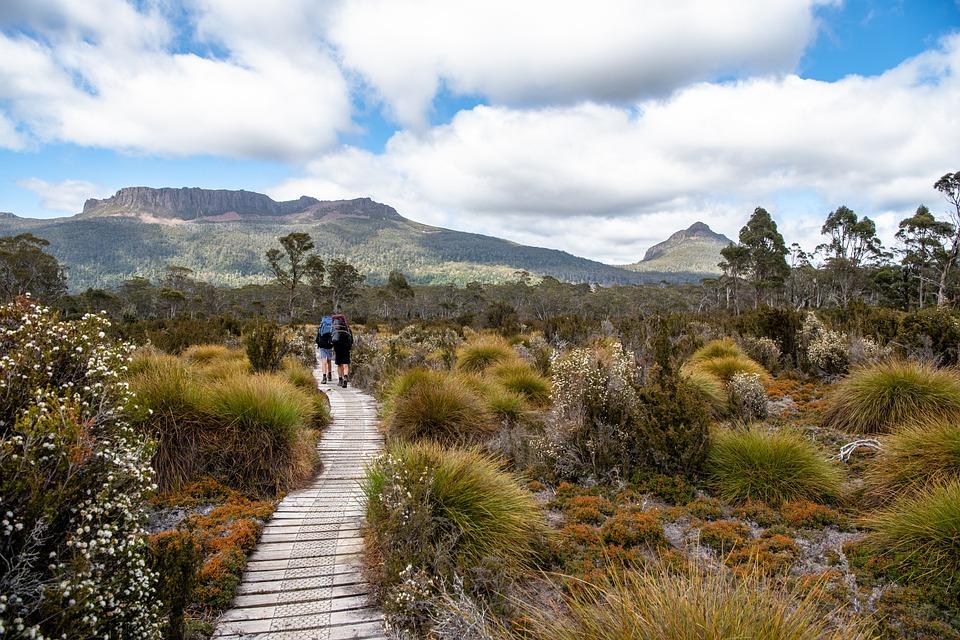 Track in Tasmania