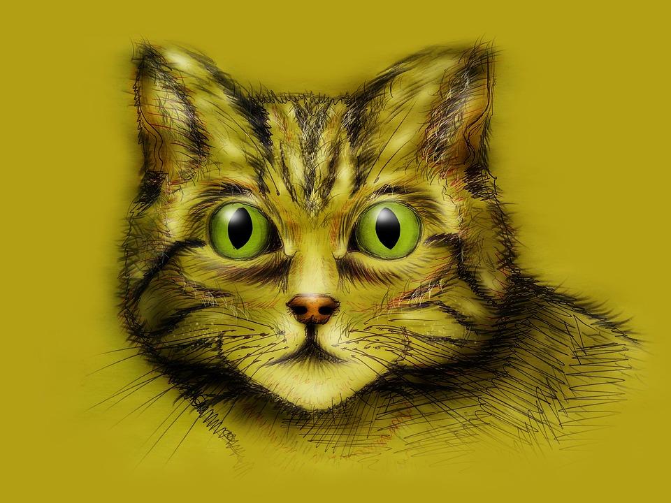 obrázky dievčat mačička