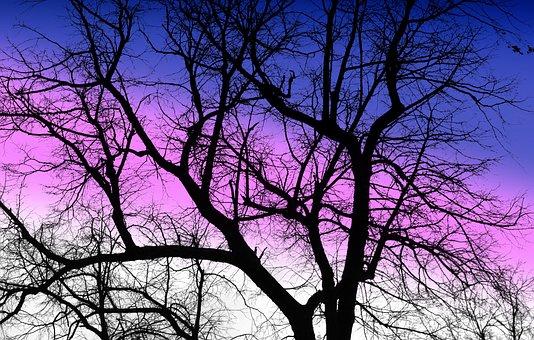 ツリー, 冬, 裸の木, コナール, 枝, 風邪, ネイチャー, シーズン, 空