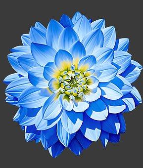 Dahlia Gambar Unduh Gambar Gambar Gratis Pixabay