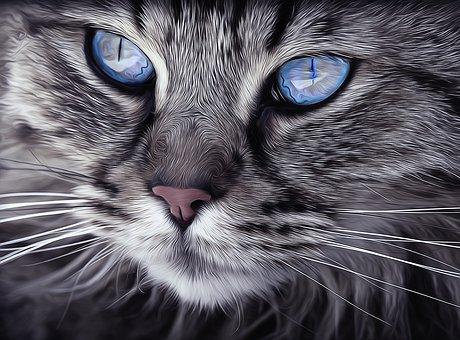 Katze, Tier, Katze-Porträt, Katzenaugen