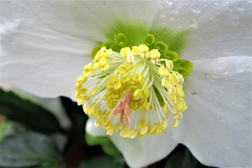 Fleur Blanche Hiver Photo Gratuite Sur Pixabay