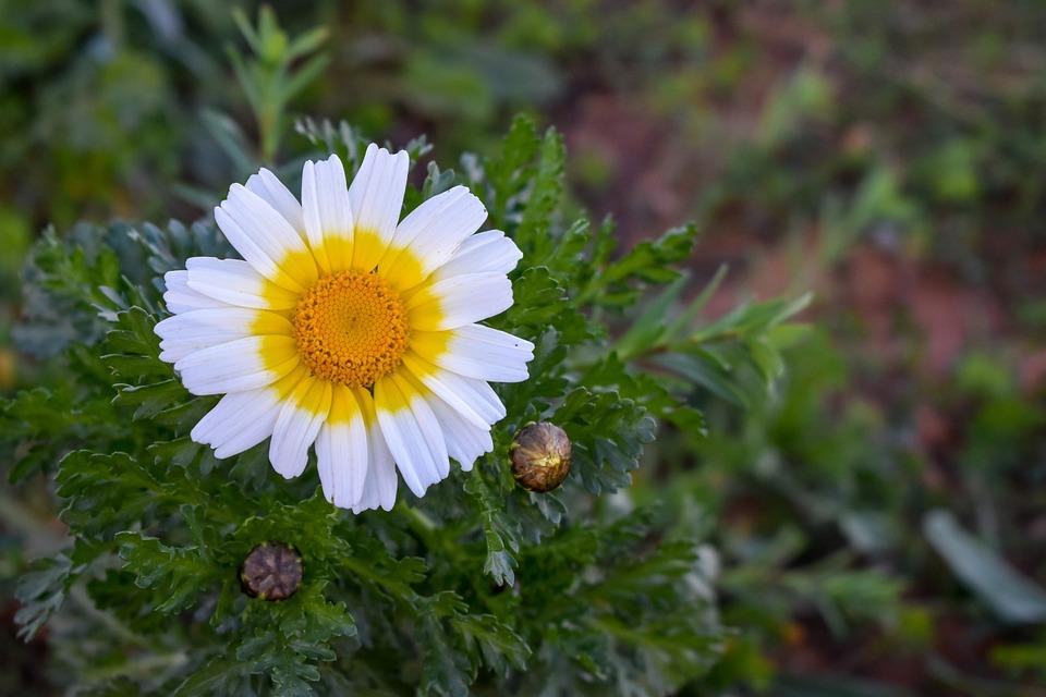Formentera Fleur Marguerite Photo Gratuite Sur Pixabay