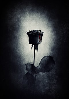 Rose, Black, Blood, Gothic
