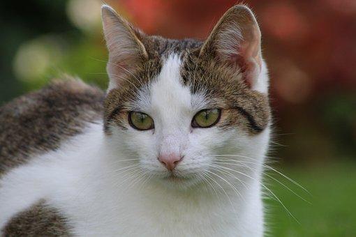 Katzen, Katze, White, Pelz, Augen