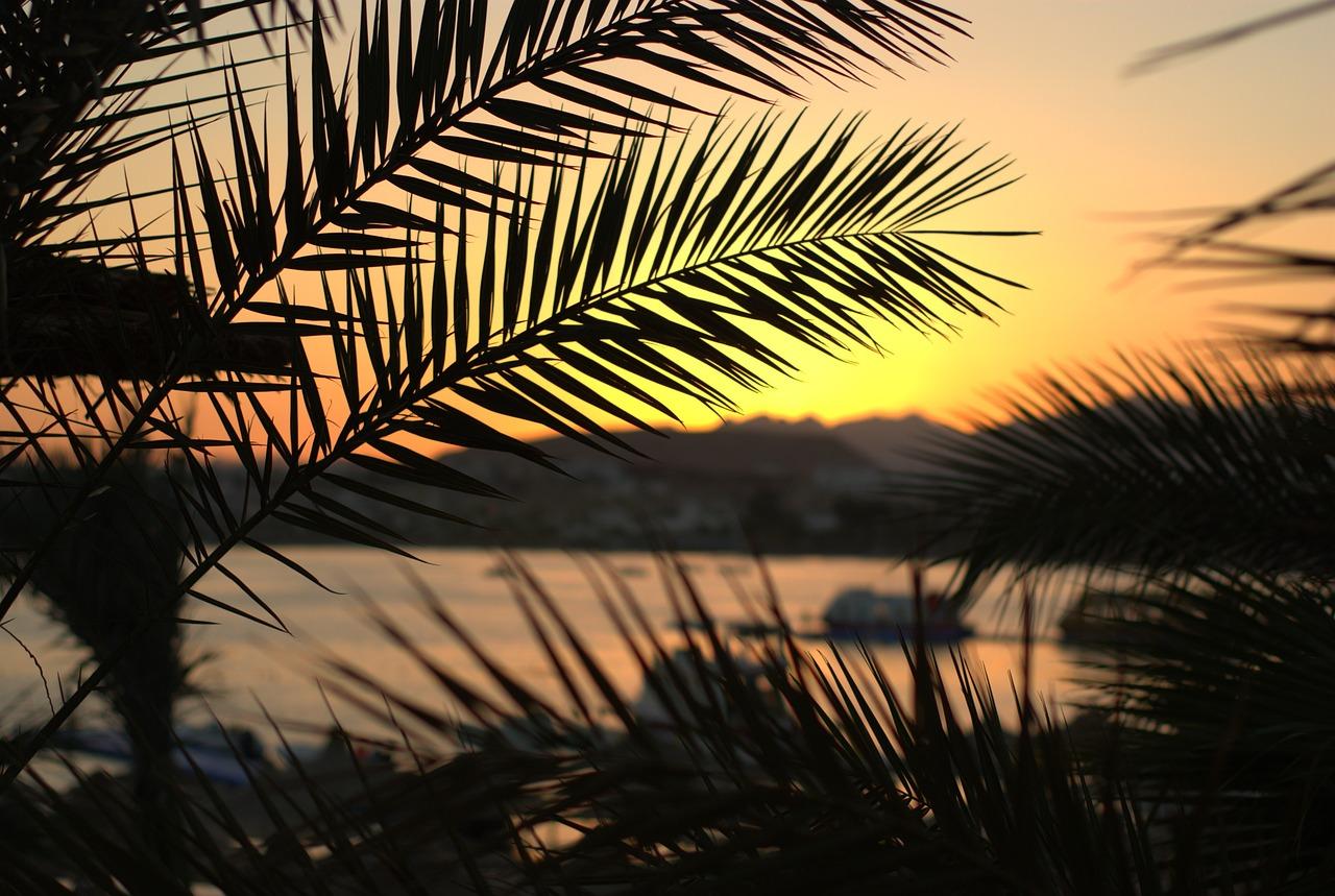 профессиональное фото море солнце ветка пальмы говорят, что