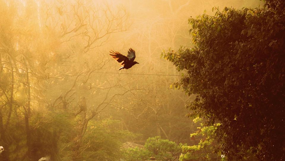 De Vrije Vogel, Vrijheid, Alleen, Gelukkig, Het Leven