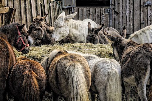 Animals, Donkey, Farm, Mule, Pony, Horse