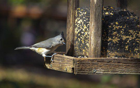 Bird, Cute, Tufted Titmouse, Bird Feeder
