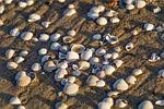 muszelki na piasku, plaża, muszla