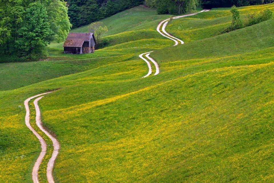 離れた, 牧草地, 道, 小屋, 風景, 緑