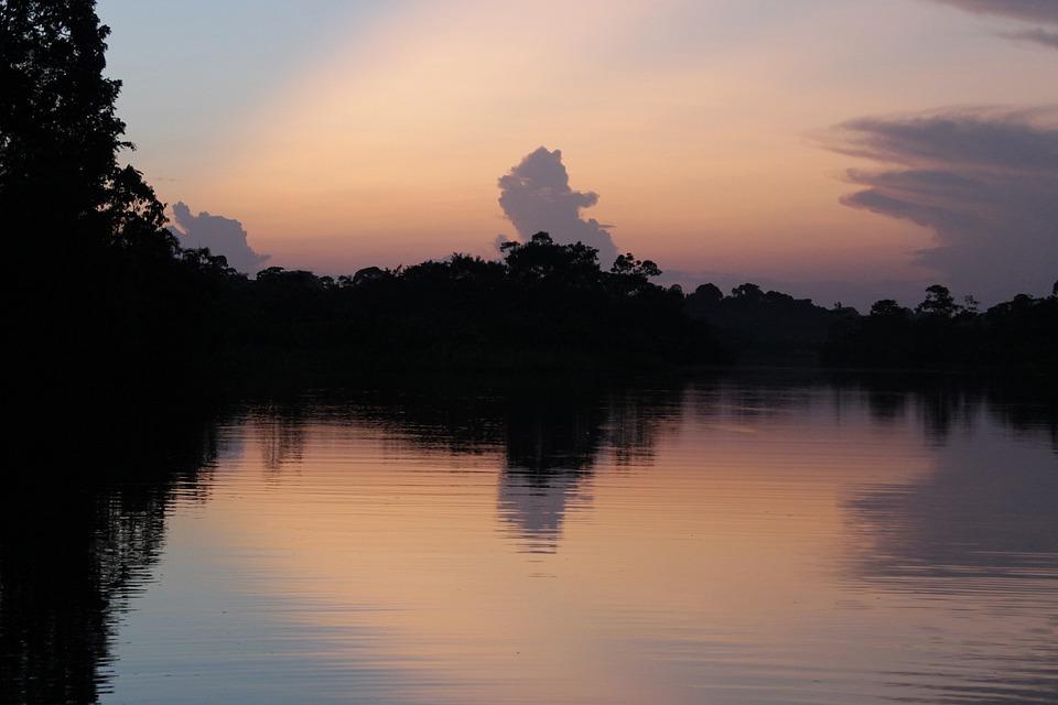 Amazon, Équateur, Paysage, Exotique, Forêt, Rouge