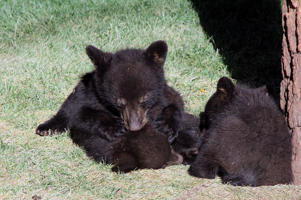 медведь медвежонок сараев фото часть времени