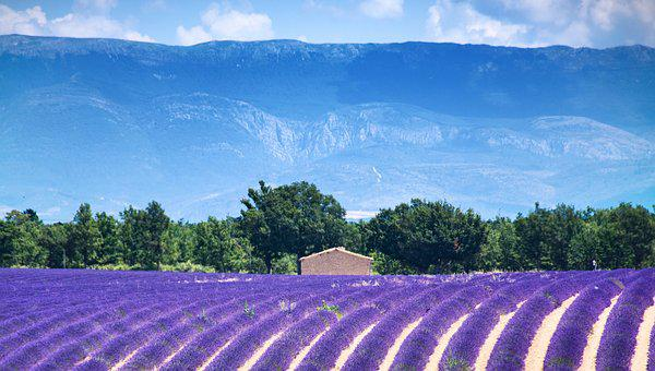 Valensole, France, Europe