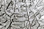 winter, śnieg, gałązki