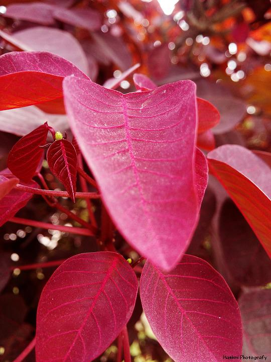 Leafs Pink Focus Free Photo On Pixabay