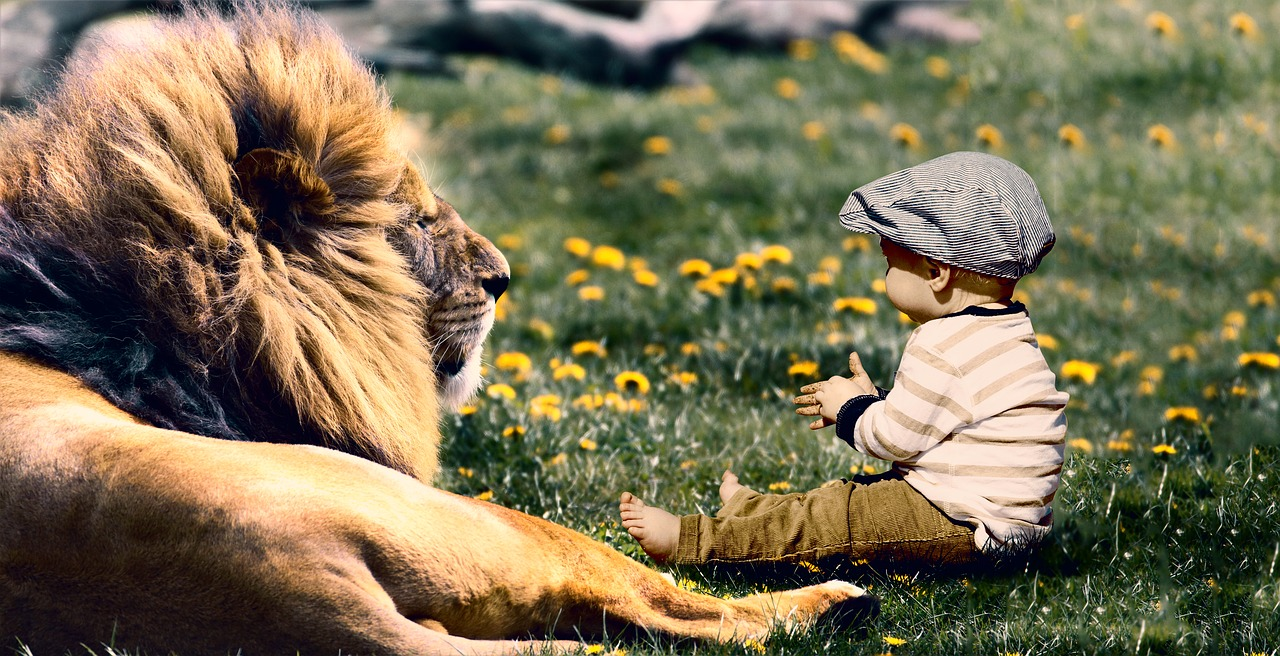 лев и его младенец картинки подъяруса, эти