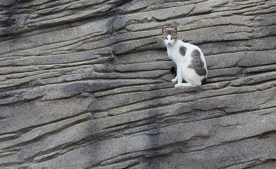 Katze, Fels, Tier, Sit, Katzen