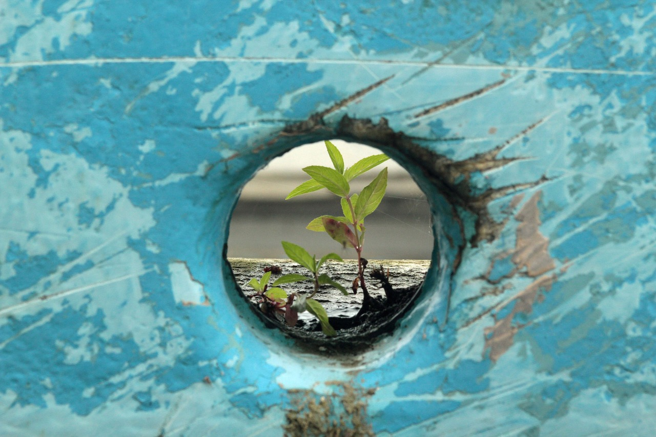 plant in a hole