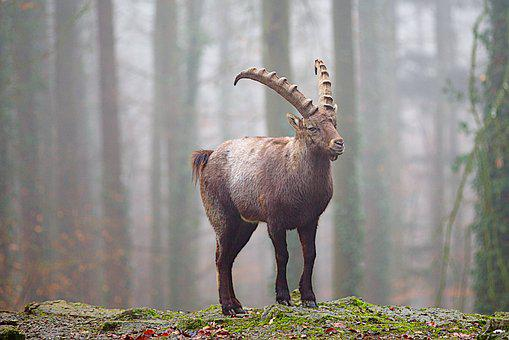 200+ Free Capricorn & Astrology Images - Pixabay