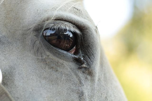 The Horse Eye Longing - Free photo on Pixabay