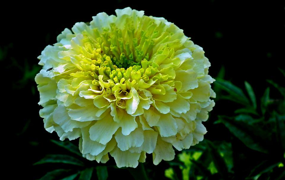 f5b19b7d6bd1 Nechtík Kvetina Leto - Fotografia zdarma na Pixabay