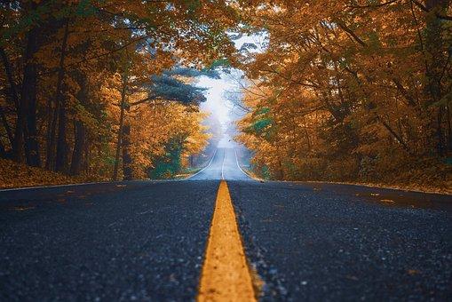 Outono, Rua, Árvores, Natureza, Asfalto