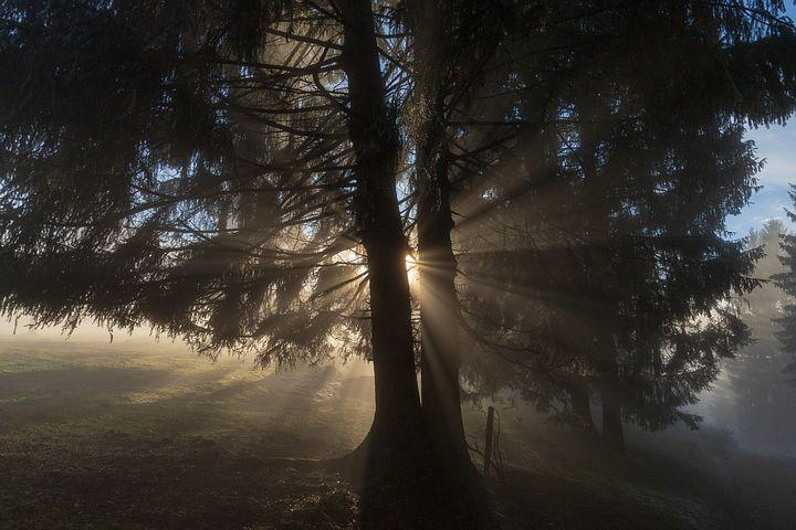Light, Ray, Tree, Sun, Lichtspiel, Mood