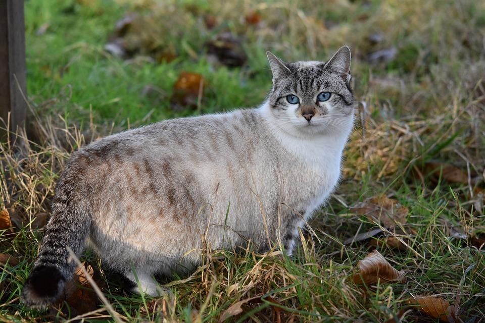 veľké krásne mačička pics lízanie mačička, kým striekať