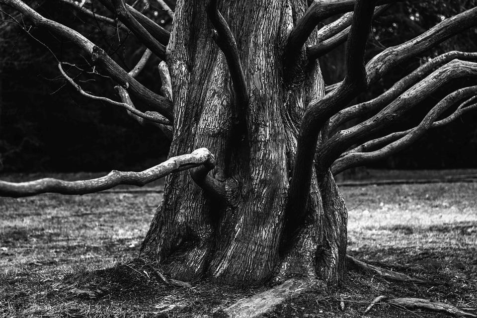 Root, Boom, Esthetische, Bijkantoren, Takken, Schors