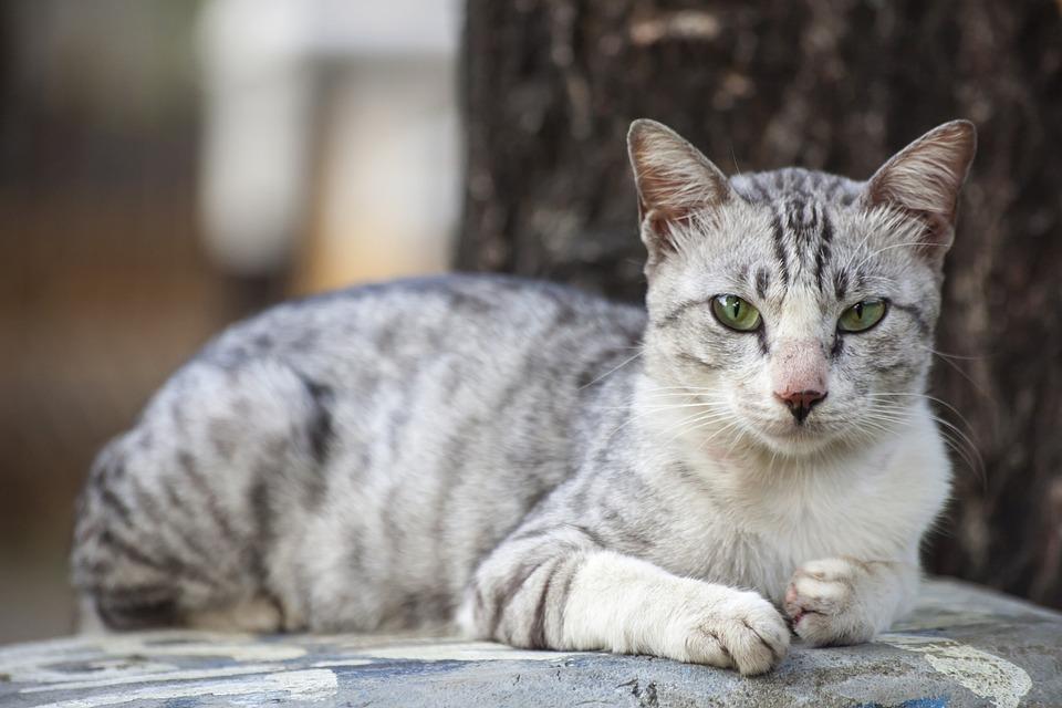 f1e69f969882 Ζώο Γάτα Κατοικίδιο - Δωρεάν φωτογραφία στο Pixabay