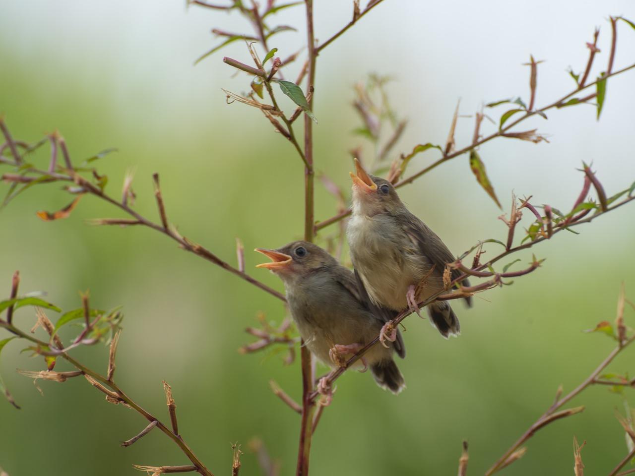 Птичка поет песню картинки