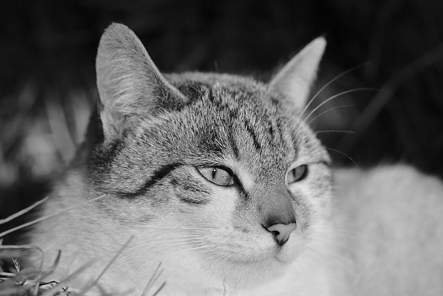 Κατεβάστε αυτή την δωρεάν εικόνα σχετικά με Γάτα Το Μουνί Nala Τα Μάτια Της.