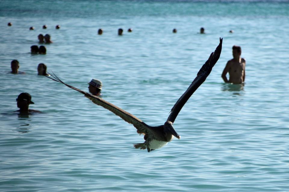 Úžasné veľké vtáky