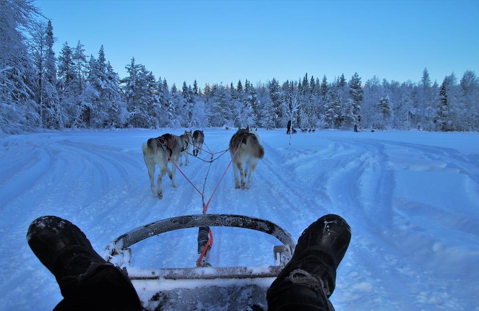 Dogs, Pimp My Sleigh, Snow, Frozen, Ice, Icy, Snowy