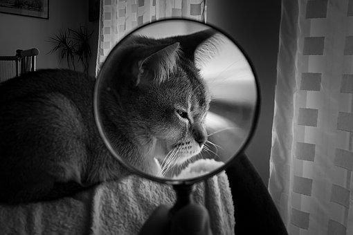 虫眼鏡, 猫, ペット