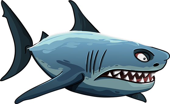300+ Free Shark Pictures & Images in HD - Pixabay - Pixabay