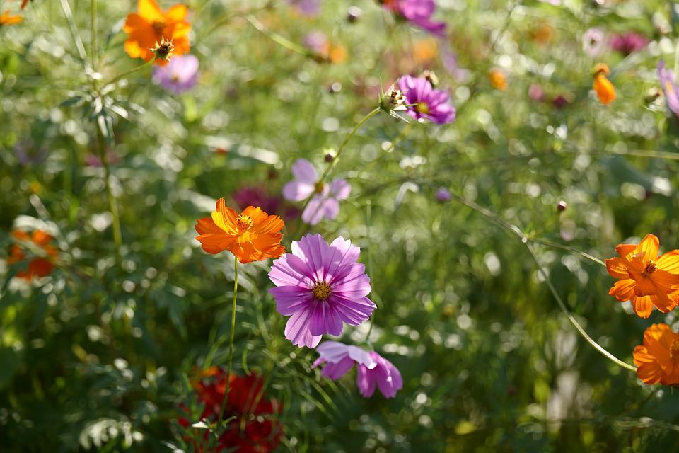 64538ed064e1 Kvetina Krásna Leto - Fotografia zdarma na Pixabay