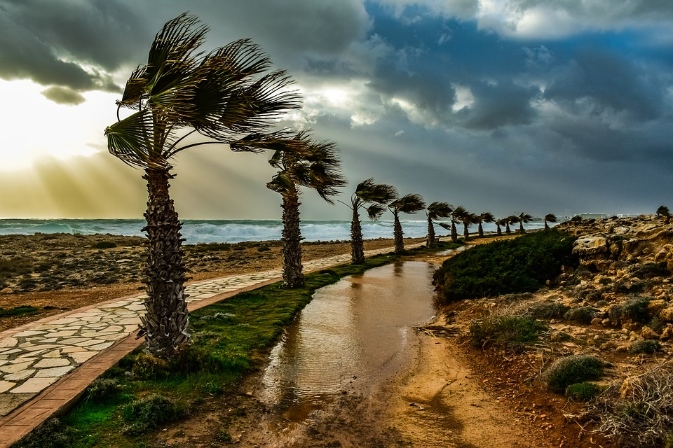 Trees, Path, Palm Trees, Wind, Windy, Weather, Nature